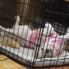 Narvas šuniui – ar viską žinote?